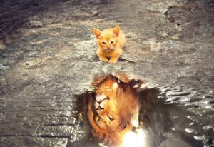 cat, lion, tawny